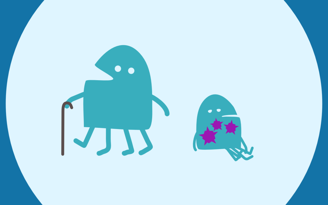 How does ageing affect immunity, and vice versa?